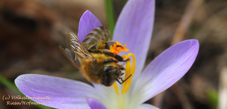 Dein Bienengarten